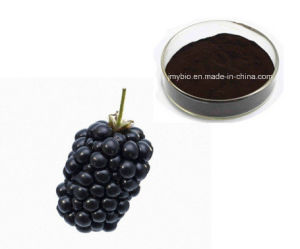 100% Natural Blackberry Extract Anthocyanidins by HPLC pictures & photos