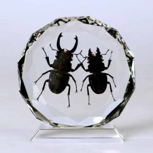Insect Amber Desktop Decoration (BC028)