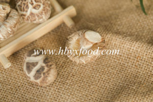 Dried Vegetable Tea Flower Shiitake Mushroom pictures & photos
