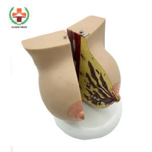 Wholesale Anatomical Model, China Wholesale Anatomical Model