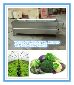 Stainless Steel Vegetables Blanching Machine