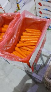 Export Fresh Carrot to Indonesia Market pictures & photos
