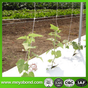 Factory Direct Price Extruded Plastic Pea and Bean Net/Climbing Plant Support Net/Pdhe Cucumber Net pictures & photos