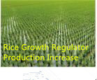 New Compound Plant Growth Regulator Brassinolide Anti-Disease Nutrition Balance Production Increase pictures & photos