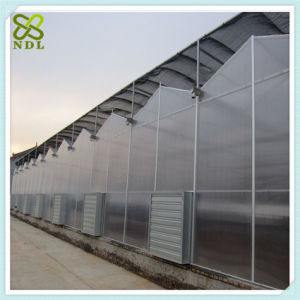 Venlo Strawberry Green House with Thermal Blanket