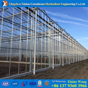 Professional Manufacturer Hy6droponic System Factory Price Glass Greenhouse pictures & photos