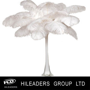 Hof0-1 Ostrich Feather for Wedding