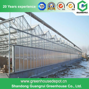 Ommercial/ Agriculture Steel Structure Polycarbonate Sheet Greenhouse for Flower and Vegetables pictures & photos