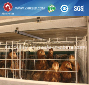 Chicken Breeding Cages for Laying Hens pictures & photos