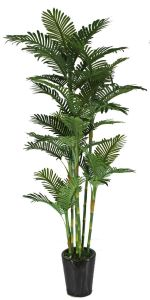Chinese Plant Artificial Phoenix Bamboo Bonsai pictures & photos