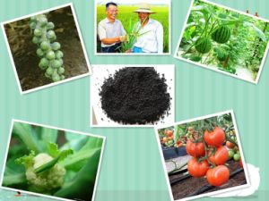 Organic Potassium Humate 85% Water Soluble Fertilizer with Fulvic Acid From Peat Leonardite pictures & photos