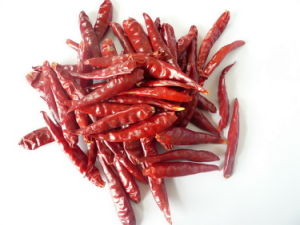 Hot Chilli Small Hot Chilli Hot Pepper Hot Red Pepper Hot Spice Hot Red Chili Hot Chillis