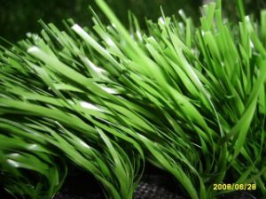 High-Quality Artificial Grass with Cheap Price/ Artificial Grass Turf /Synthetic Grass
