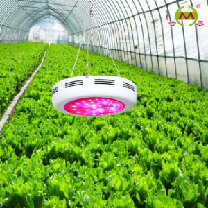 LED Grow Light (HM-G100)
