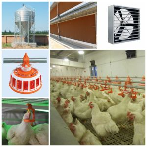 Poultry Equipments with Steel Structure House pictures & photos
