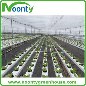 Farm Nft Hydroponics System for Vegetable Growing