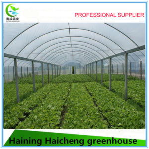 Low Cost Film Inflatable Greenhouse for Agriculture