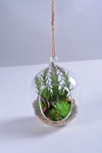 Decoration for Home Mix Succulent in Hanging Glass