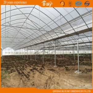 Agriculture Film Greenhouse in Multi Span with Netherlands Technology pictures & photos