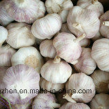 2017 New Crop China White Garlic of High Quality pictures & photos