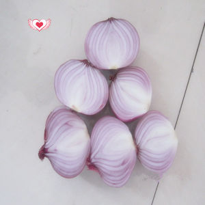Fresh Shallots Onion /Fresh Red Onion Hot Sale pictures & photos
