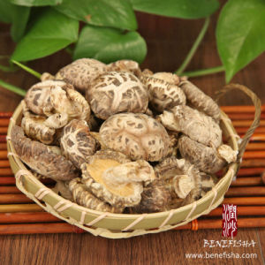 Dried Mushroom Without Stem (Glossy Surface) pictures & photos