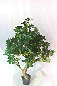 PE Material and Shrubs Plant Type Artificial Bonsai Tree pictures & photos