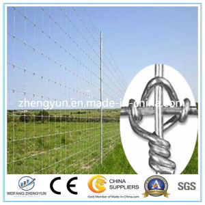 Fixed Knot Woven Wire Fence/Field Fence (Factory)
