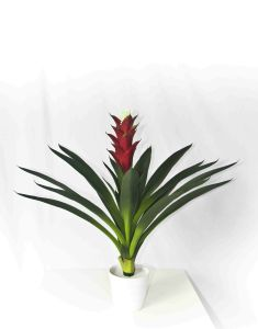 Foliage Plants Type and Indoor Plants Use Tropical Plants pictures & photos