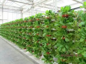 PC Sheet Intelligent Greenhouse for Modern Agricultural pictures & photos