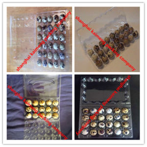 China Recyclable Clear Pet Plastic Quail Egg Trays for Packing
