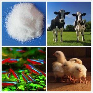 Tryptophan /Factory Supply/ Feed Grade Amino Acids (CAS: 73-22-3)