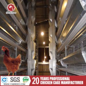 Uganda Poultry Battery Cages to Breed 20, 000 Birds pictures & photos