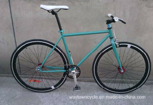 Fixed Bike (WT-2719)
