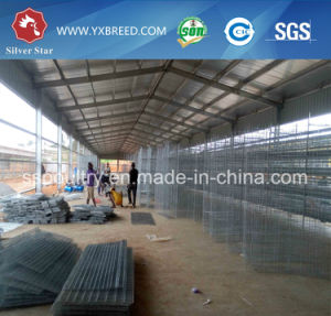 Best Quality Wire Mesh Cage for Chicken Layer Farm in Kenya pictures & photos