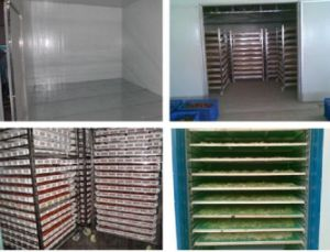 High Temperature Industrial Use Food Drying Machine for Sale pictures & photos
