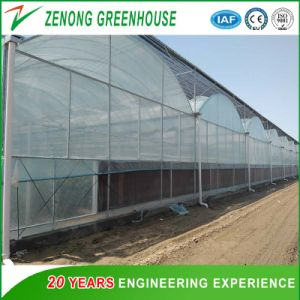 Flower/Tomatoes Green House with Cooling Pad for Sale