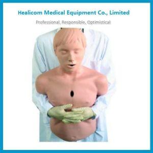 Human Body Model Price, 2019 Human Body Model Price