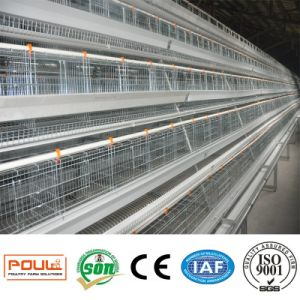 Automatic battery Layer Chicken Cage System pictures & photos