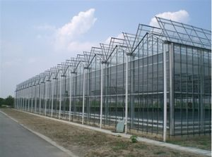 Glass Greenhouse for Vegetable Planting pictures & photos