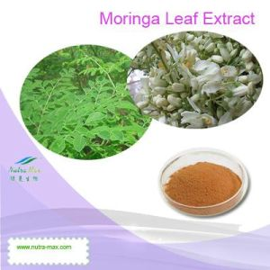 High Quality Moringa Leaf Extract (Ratio: 4: 1~20: 1)