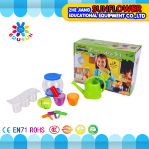 DIY Toy About Plant Grow Set for Children