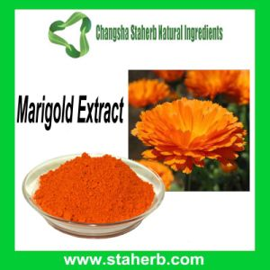10 1 20 80 Lutein And Zeaxanthin Marigold