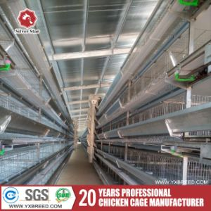 H Type 120 Birds Capacity Broiler Poultry Equipment in African Farm pictures & photos