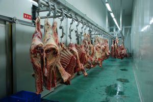 Cattle Slaughterhouse pictures & photos
