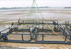 Deep Water HDPE Cage for Africa Region for Tilapia Farming pictures & photos