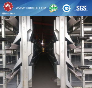 Full Automatic System a Type Layer Cage for Bolivia Farm pictures & photos