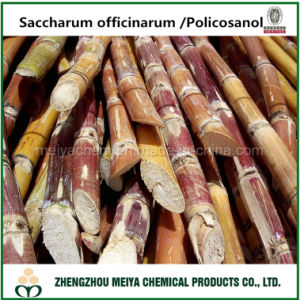 Natural Sugar Cane/ Policosanol Extract with Octacosanol 50%-90% pictures & photos