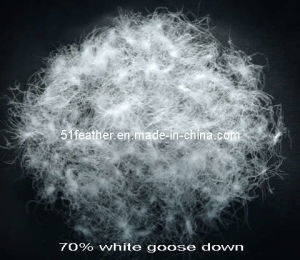 White Goose Down 70% pictures & photos