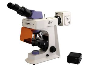 Bestscope BS-2036F (LED) Fluorescent Biological Microscope pictures & photos